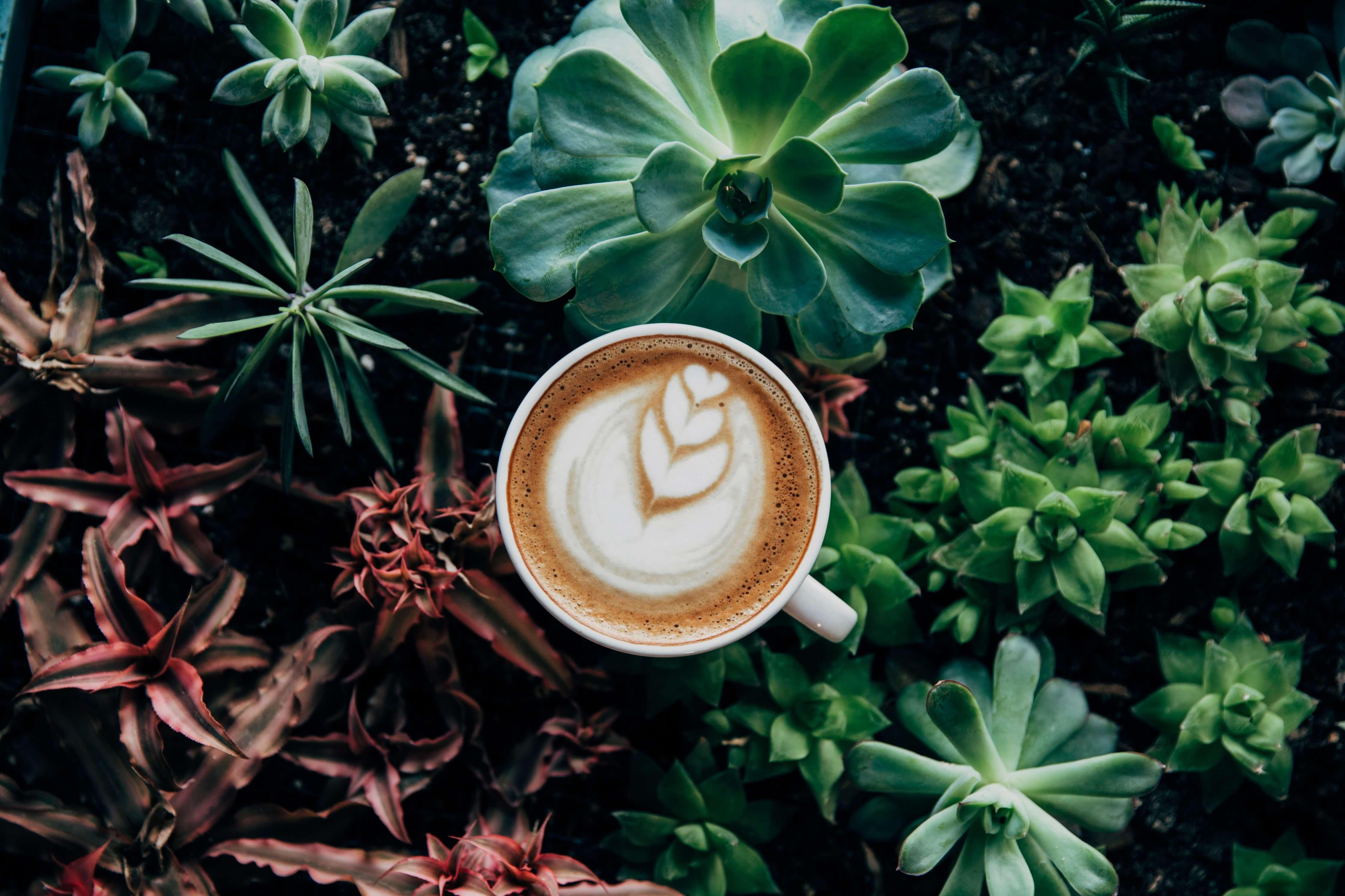 Recept Caffè Latte